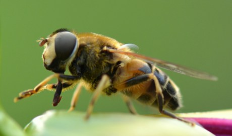 Domowe sposoby na użądlenie pszczoły