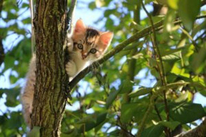 Ogród bezpieczny dla kota i kot bezpieczny dla ogrodu