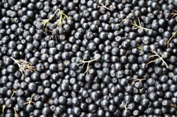 Czym zastąpić owoce acai? Najlepsza będzie aronia