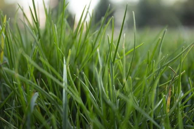 Trawnik. Co robić, aby nasza trawa wyglądała świetnie