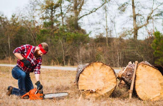 Praca pilarką łańcuchową przy ścince drzew