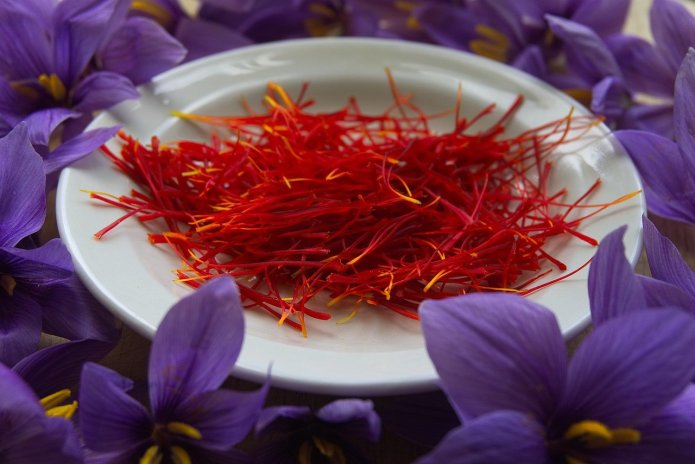 Szafran - najdroższa przyprawa świata. Pręciki szafranu i kwiaty krokus uprawnego