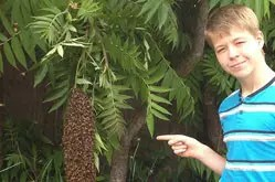 Sam and a swarm