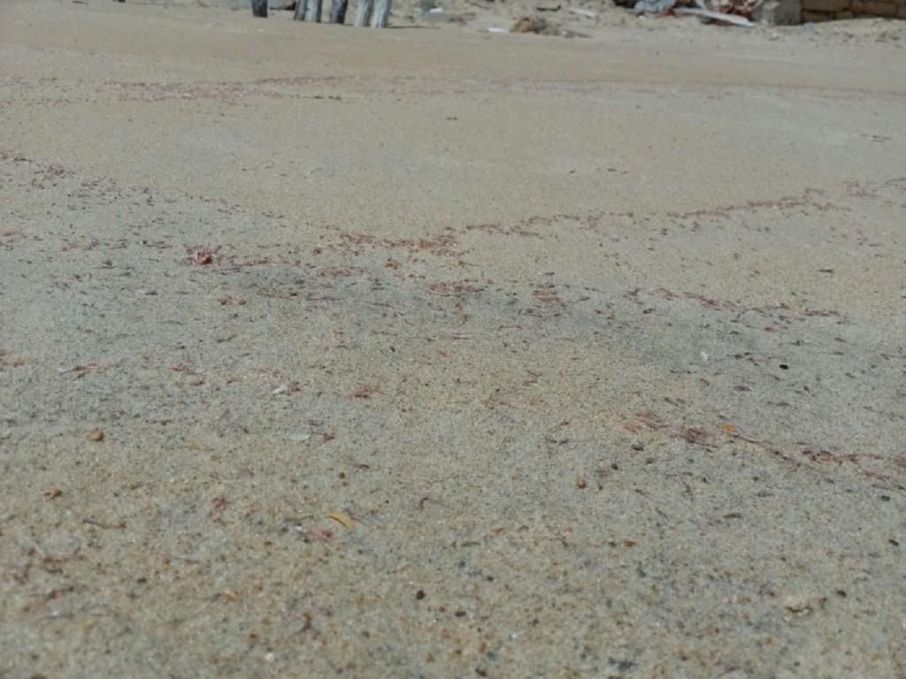 Ibama investiga larvas de camarões mortas no litoral Norte do Rio Grande do Norte