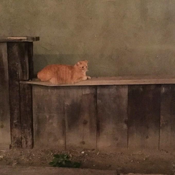 street cat in Temecula, California