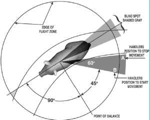 Figure 2: Point of balance, blind spot and flight zone for a pig. Courtesy of Temple Grandin, 2006 [8].