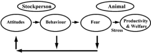 Figure 4: Caretaker-Animal interaction. Courtesy of Hemsworth, 2003 [16]