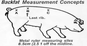 Backfat Measurement