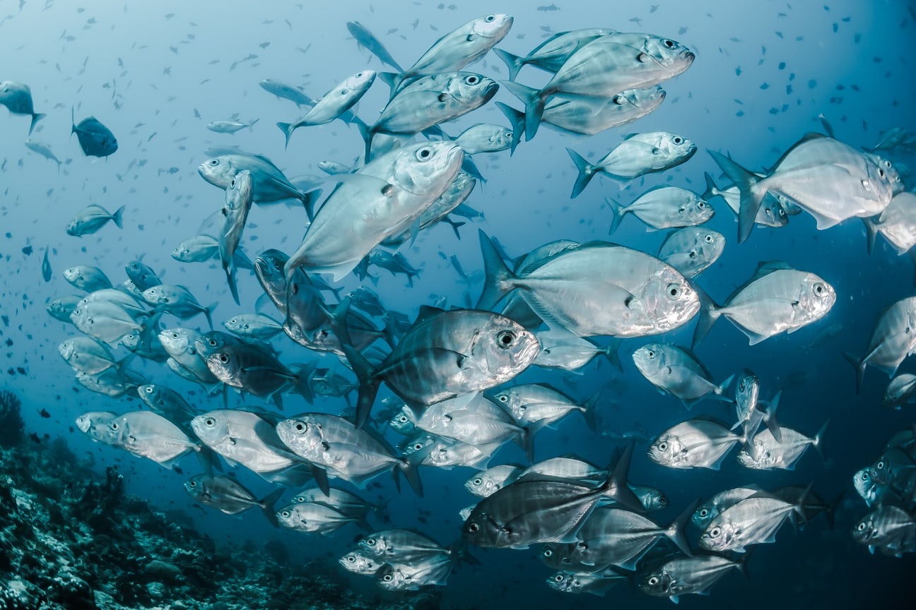 Sustainable seafood to combat food insecurity #WorldFoodDay