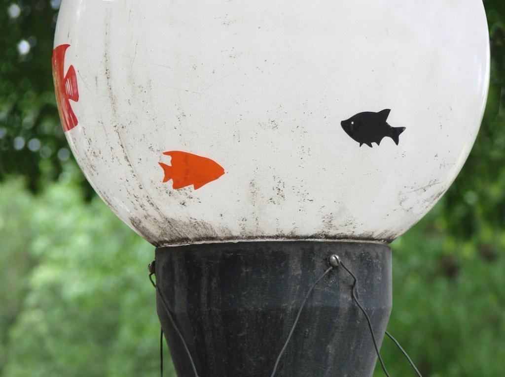 aquario-suspenso05