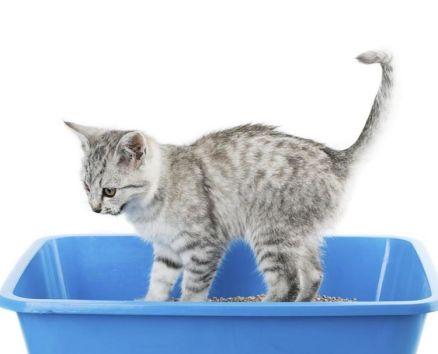 gatos-necesidades