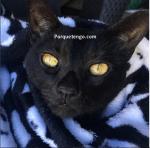 Porque tengo Alergias A Los Gatos
