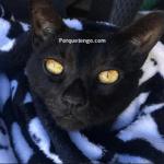 Por que Tengo Alergias A Los Gatos ?