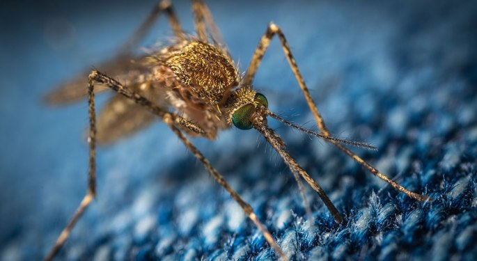 Mosquito on blue jeans