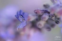 Purple Flower, Central Park 7/29/2014 v2