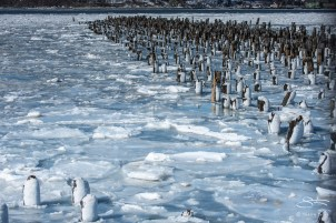 Ice and Pilings on the Hudson 2/25/2015