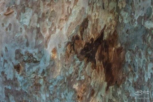 Bark at Parriwi Park