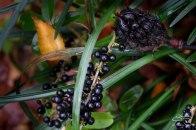 Berries in St Luke's