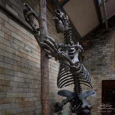 Giant Sloth, Natural History Museum, London 12/22/2015