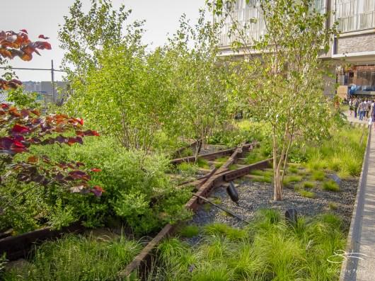 2009-07-03 High Line 13