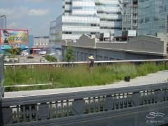 20090803 High Line 18
