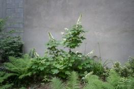 20110604 Dias Y Flores Garden 14
