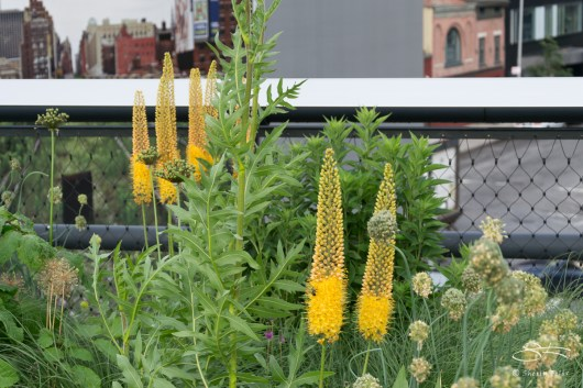 2011-06-14 High Line 37