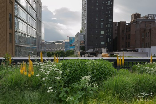 2011-06-14 High Line 60