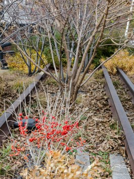 2011-11-27 High Line 01