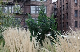 2012-10-15 High Line 10