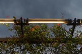 2016-05-08 High Line 23