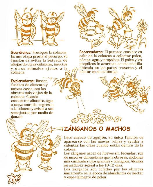 MANUAL DE APICULTURA PARA NIÑOS