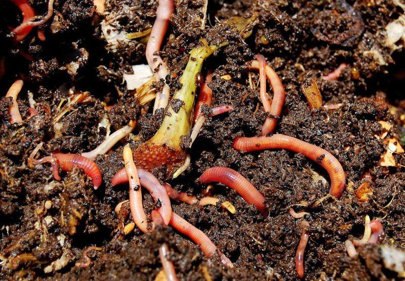 Guía práctica del vermicompostaje: Cómo hacer vermicomposteras y humus de lombriz