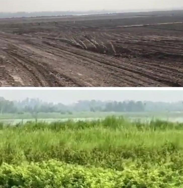, Proyecto pakistaní convierte un desierto en un frondoso bosque