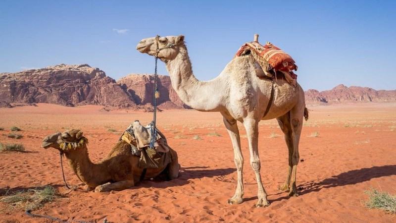 Este material inspirado en la piel de camello se enfría sin electricidad