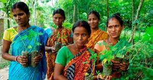 , Por cada niña que nace, mujeres hindúes plantan 111 árboles