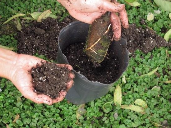 , Transforma una rama de tu frutal en un nuevo árbol