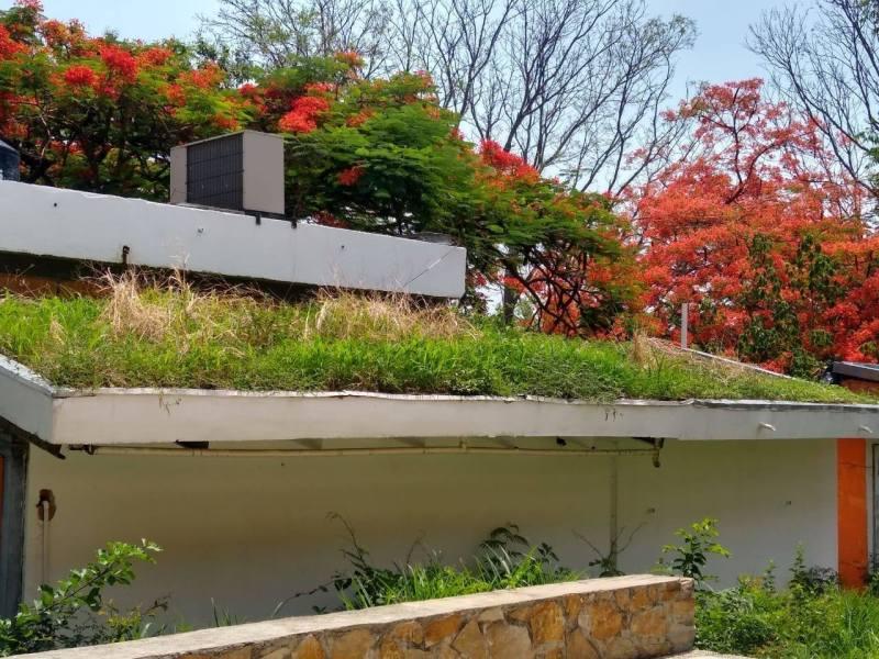 , Mexicanos crean techos verdes que refrescan los ambientes hasta 15 grados