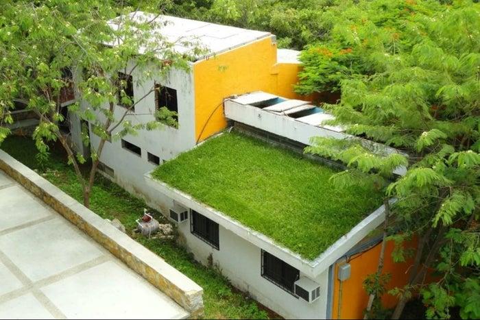 Mexicanos crean techos verdes que refrescan los ambientes hasta 15 grados