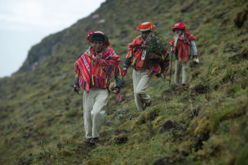 , Comunidades andinas están reforestando los bosques más altos del mundo
