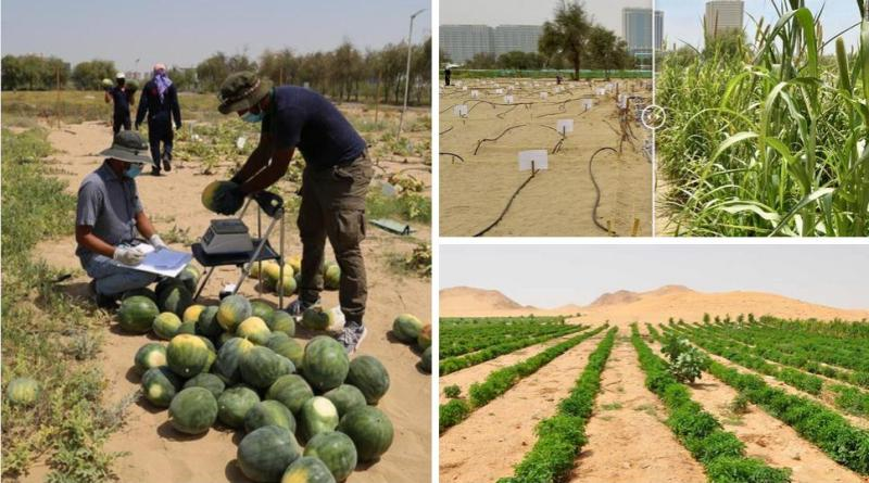 , Crean método que convierte la arena del desierto en tierra fértil para cultivar