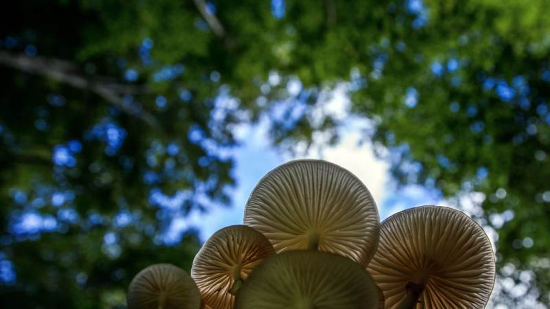 , Descubren un hongo que digiere plásticos y luego los convierte en materia orgánica