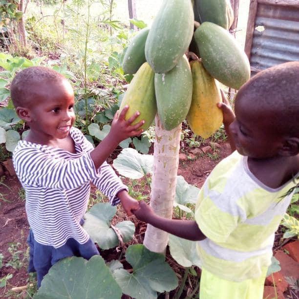 , Joven enseña agricultura orgánica y permacultura para erradicar la pobreza de su pueblo