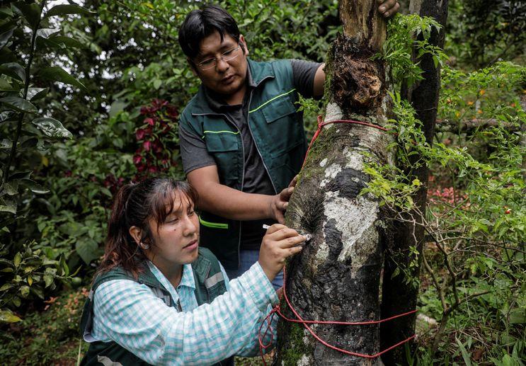 , Pareja creó un santuario para abejas en la selva y están salvando miles de ellas
