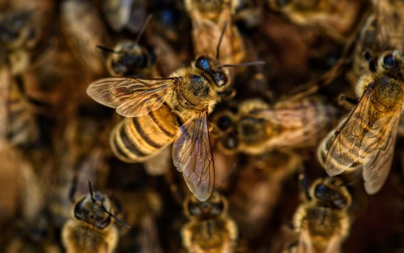 , Morgan Freeman convierte su finca de más de 50 hectáreas en un santuario de abejas