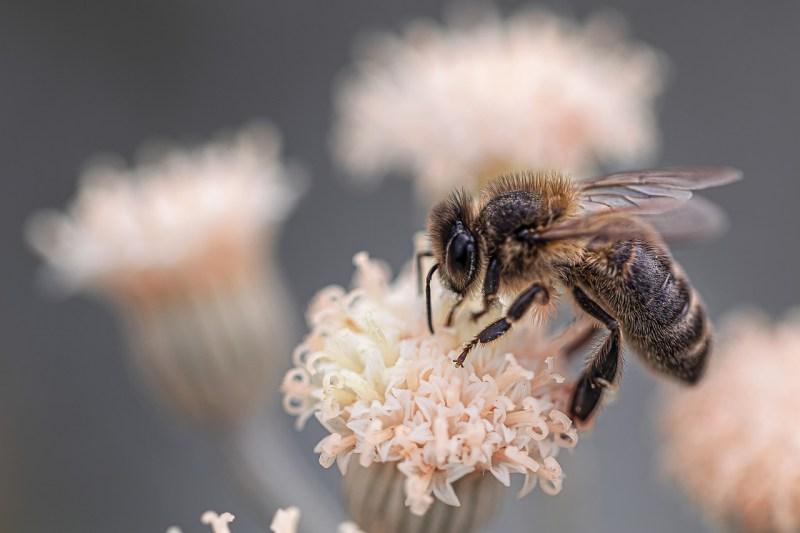 , Las abejas han sido declaradas los seres vivos más importantes del planeta