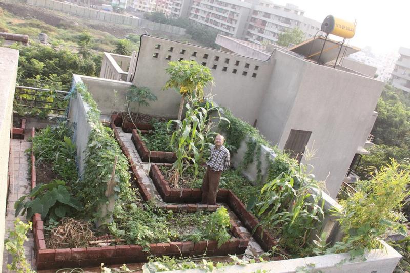, Un consultor IT comenzó una huerta urbana y convenció a sus vecinos gracias al ajo