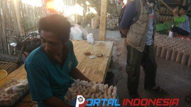 Photo of Menengok Budidaya Jamur Tiram Milik Supriyono di Situbondo