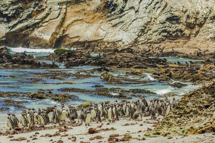 Resultado de imagen para y las Reserva Nacional de Sistemas de Islas, Islotes y Puntas Guaneras