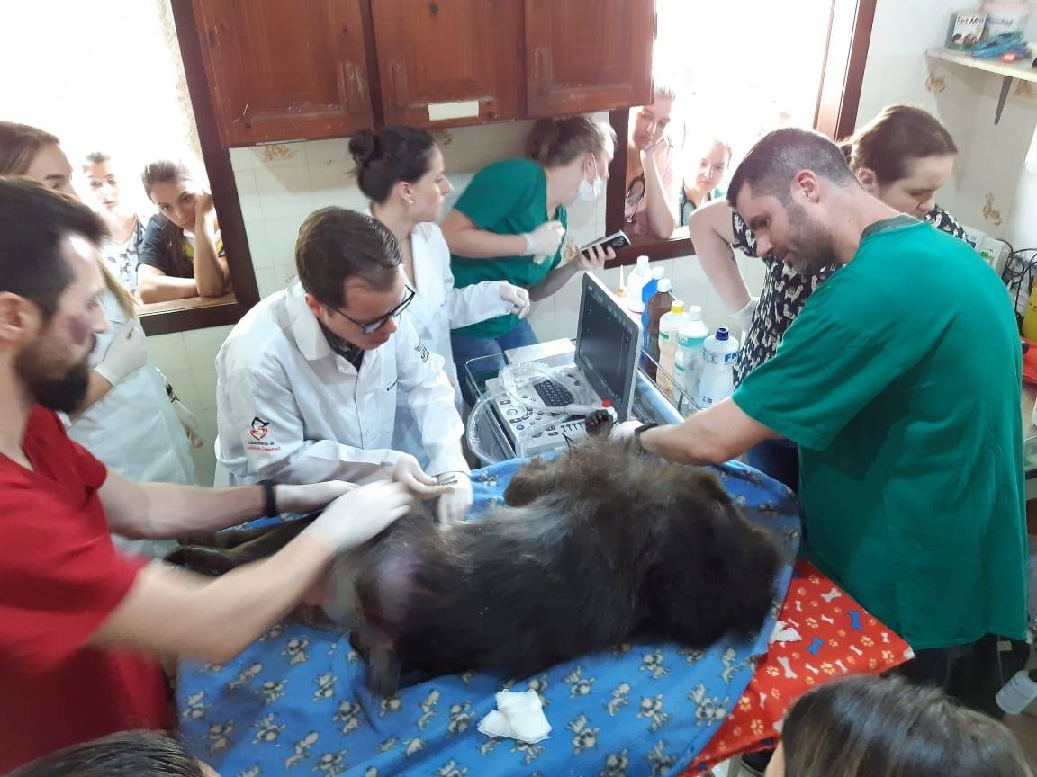 Zoo realiza check-ups nos animais